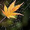 http://thumbnails4.imagebam.com/10530/d75a34105298495.jpg